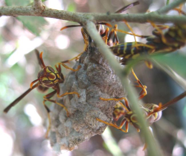 Cate's Hive 11.jpg