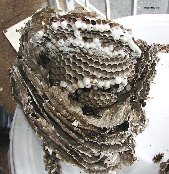 nest cross section.jpg