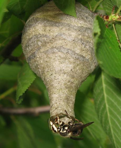 nest tube.jpg