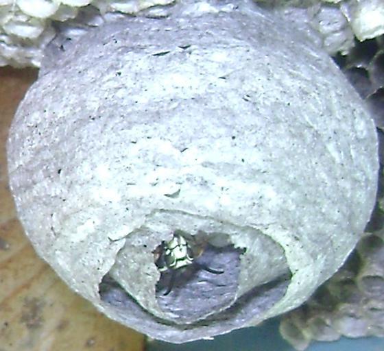 arctica a nest 2.jpg