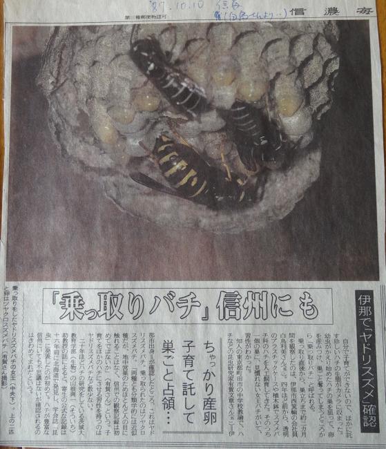 shinanoensis nest.jpg