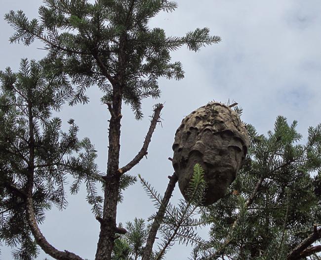 provespa nest.jpg